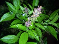 The Best Mosquito Repellent Plants for the Patio ...