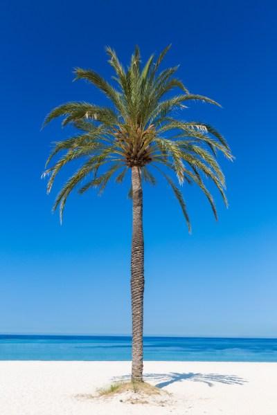 Palm Tree On The Beach Free Stock Photo - Public Domain ...
