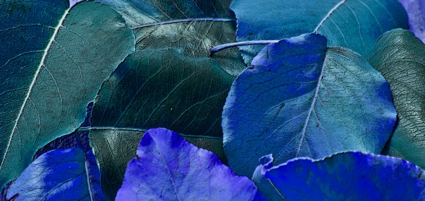 blue leaves free stock