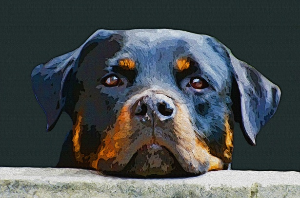 Digitally Painted Rottweiler Dog Free Stock Photo  Public