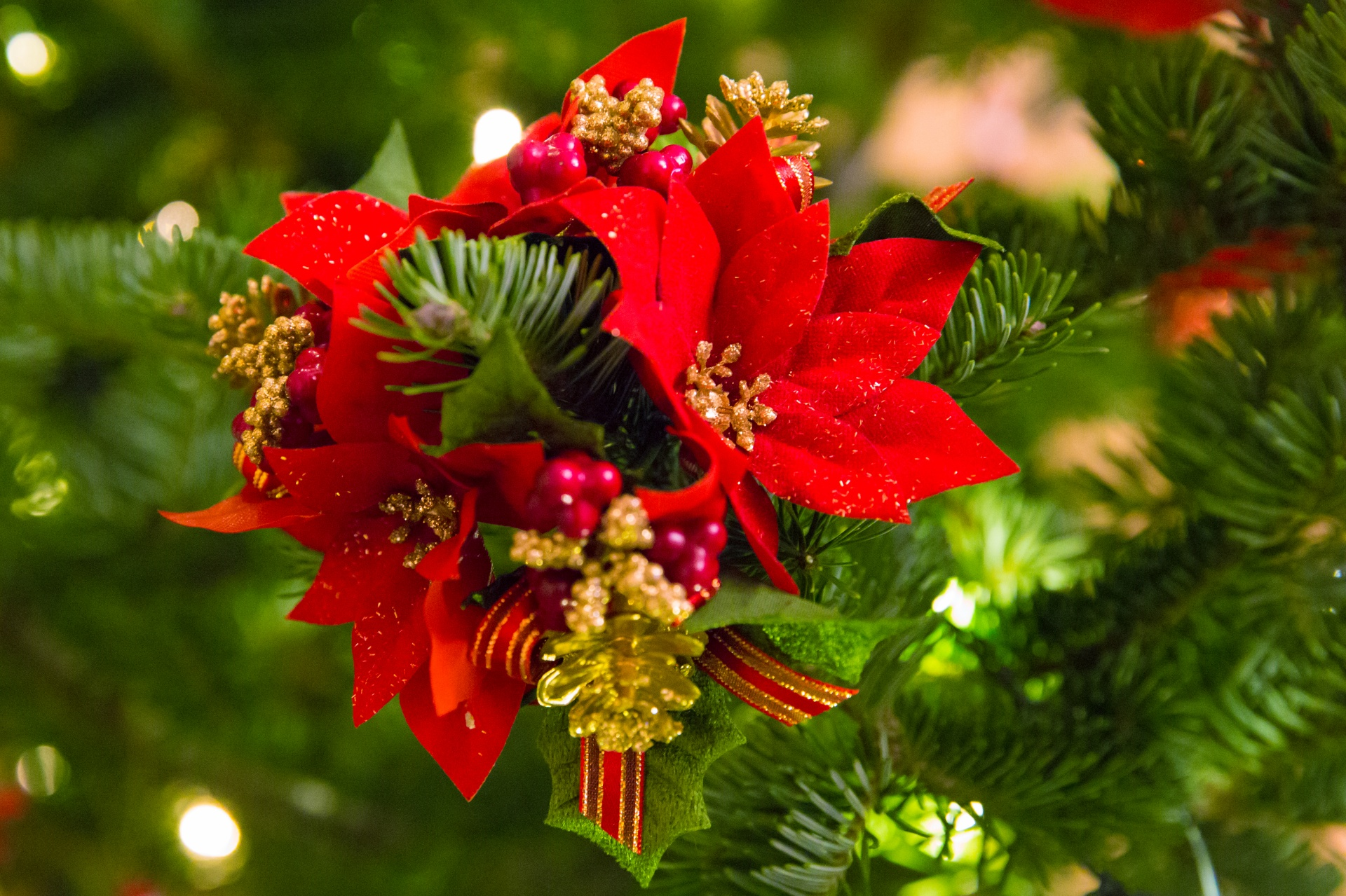 Poinsettia, Christmas Flower
