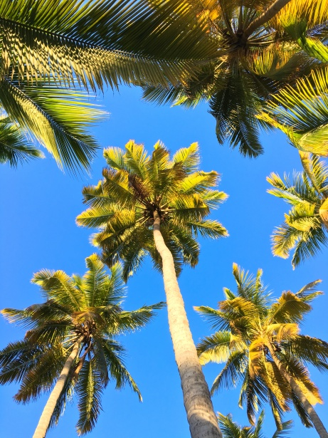 Light Blue Iphone X Wallpaper Palm Trees And Sky Free Stock Photo Public Domain Pictures