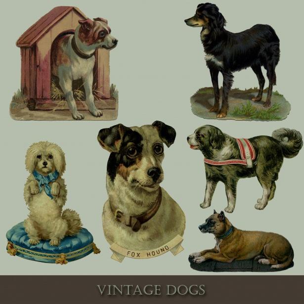 Cute Wallpaper Animals Art Vintage Dog Set Illustrations Free Stock Photo Public