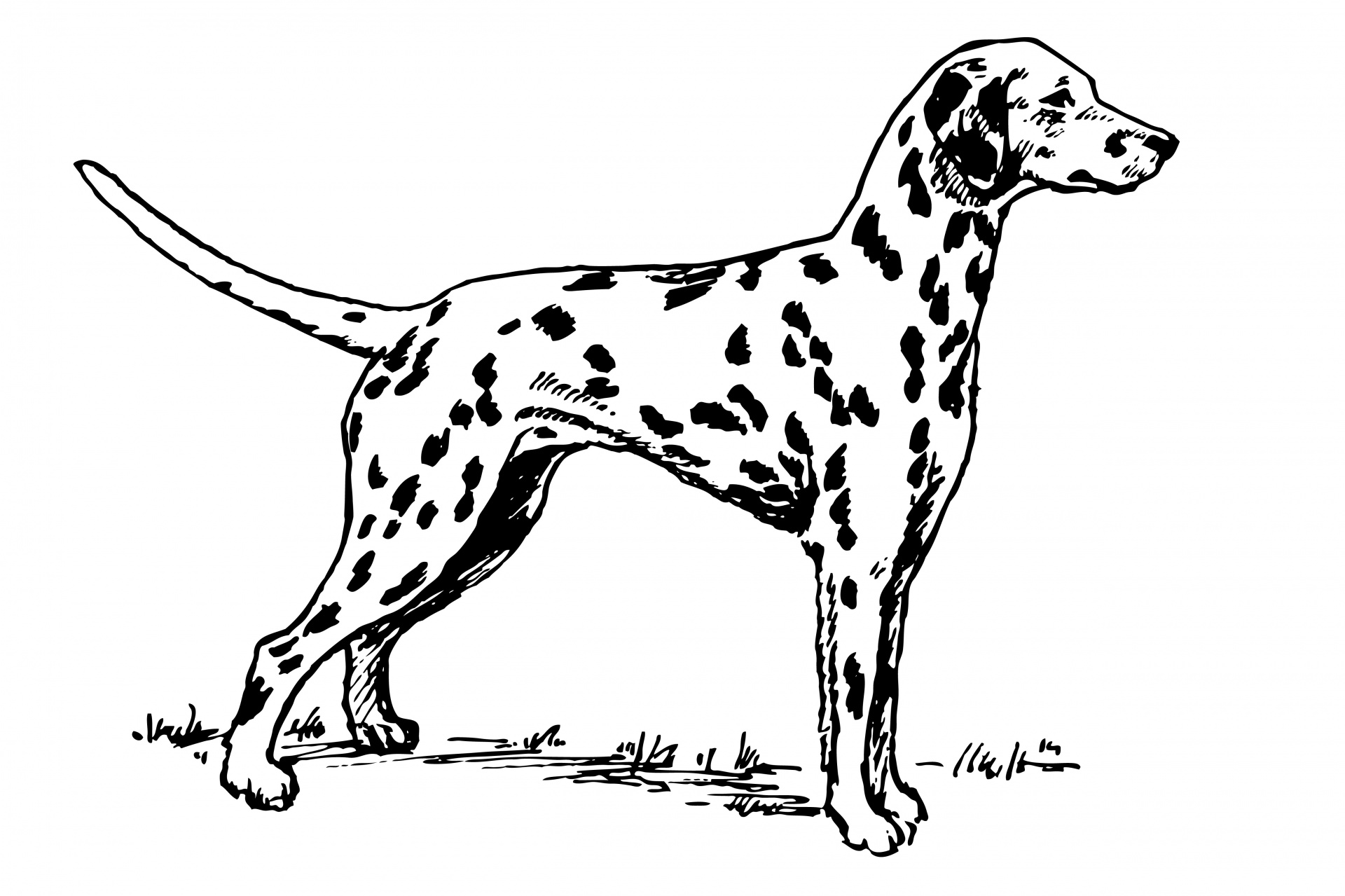 Dalmatian Dog Clipart Free Stock Photo