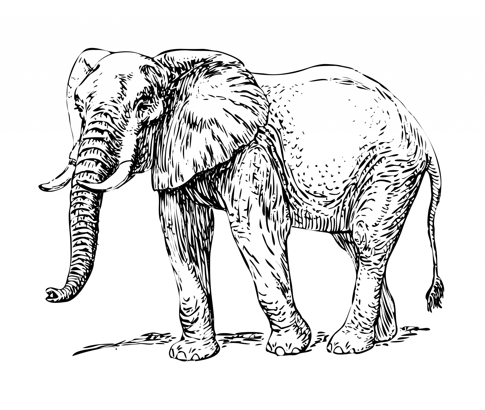 Elephant African Clipart Free Stock Photo
