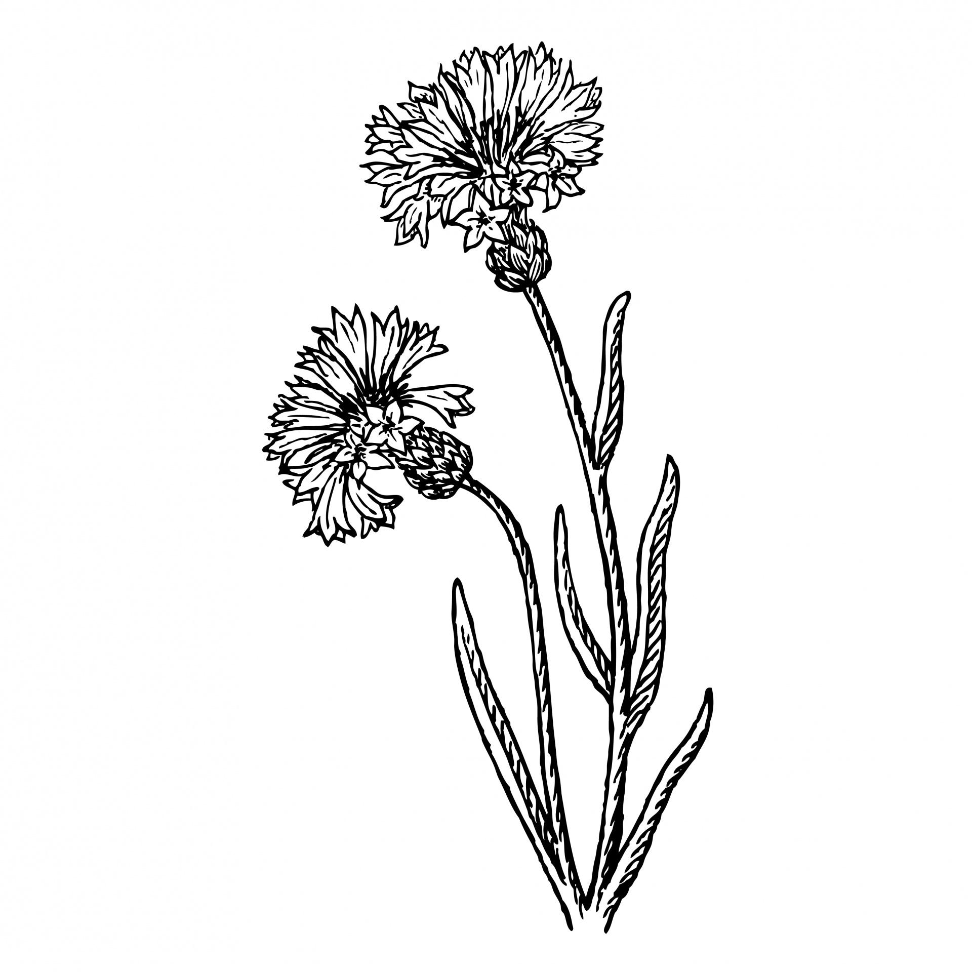 Flowers Clipart Illustration Free Stock Photo