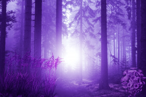 Gif Images Animated Wallpapers Fantasy Forest Free Stock Photo Public Domain Pictures