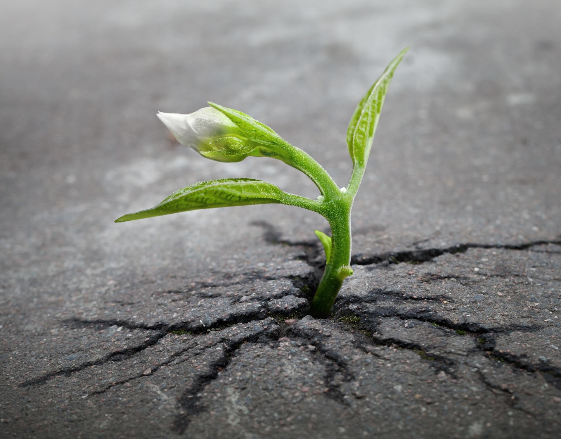 Potential, Growing, Survival