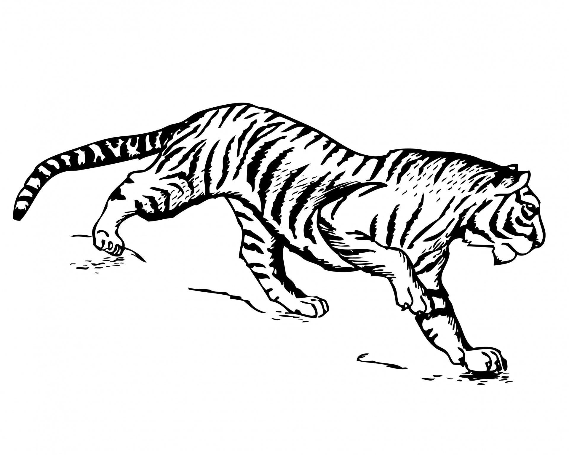 Tiger Clipart Illustration Kostenloses Stock Bild