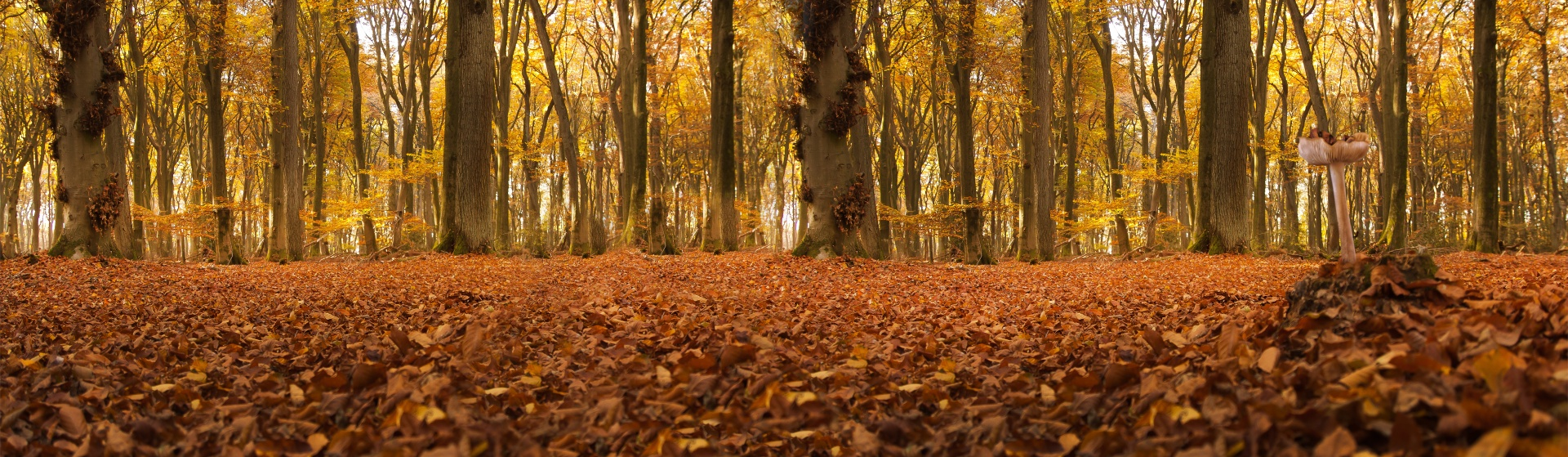 Fall Of The Autumn Hd Wallpaper Autumn Forest Panorama Free Stock Photo Public Domain