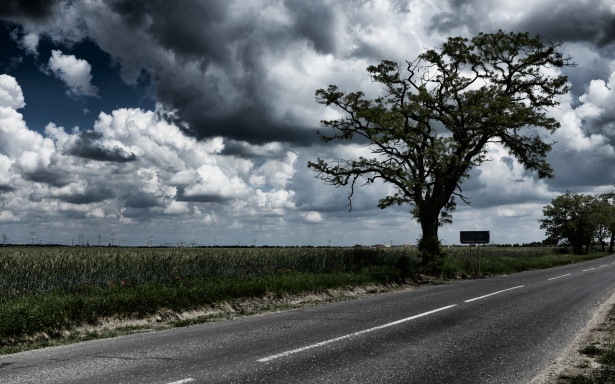 Free Fall Tree Wallpaper Cloudy Field 2 Free Stock Photo Public Domain Pictures