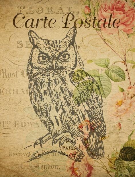 Owl Vintage French Postcard Free Stock Photo Public