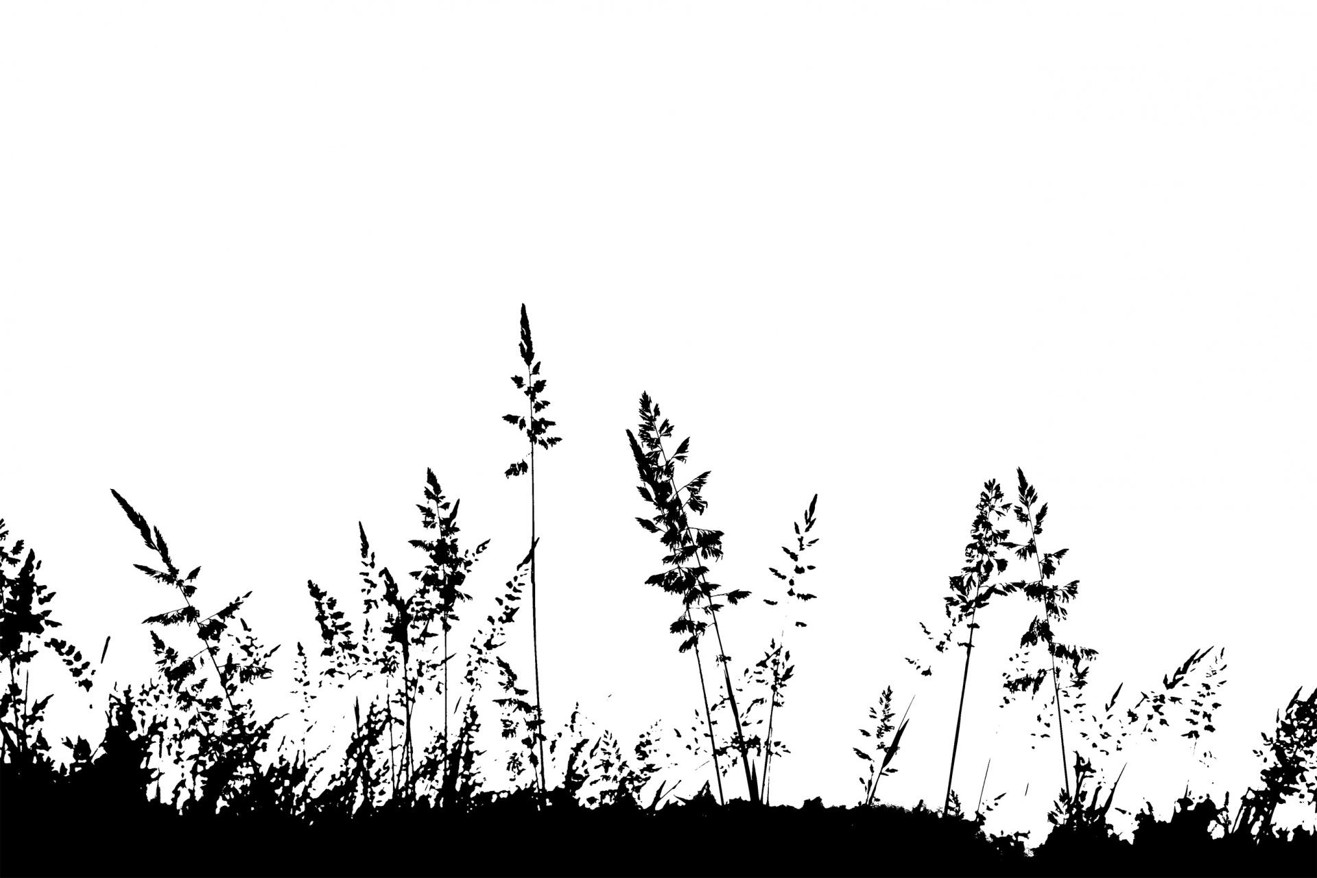 Grass Silhouette Free Stock Photo