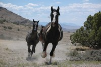 Wild Horses Running Free Stock Photo - Public Domain Pictures