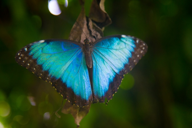Butterfly Free Stock Photo Public Domain Pictures