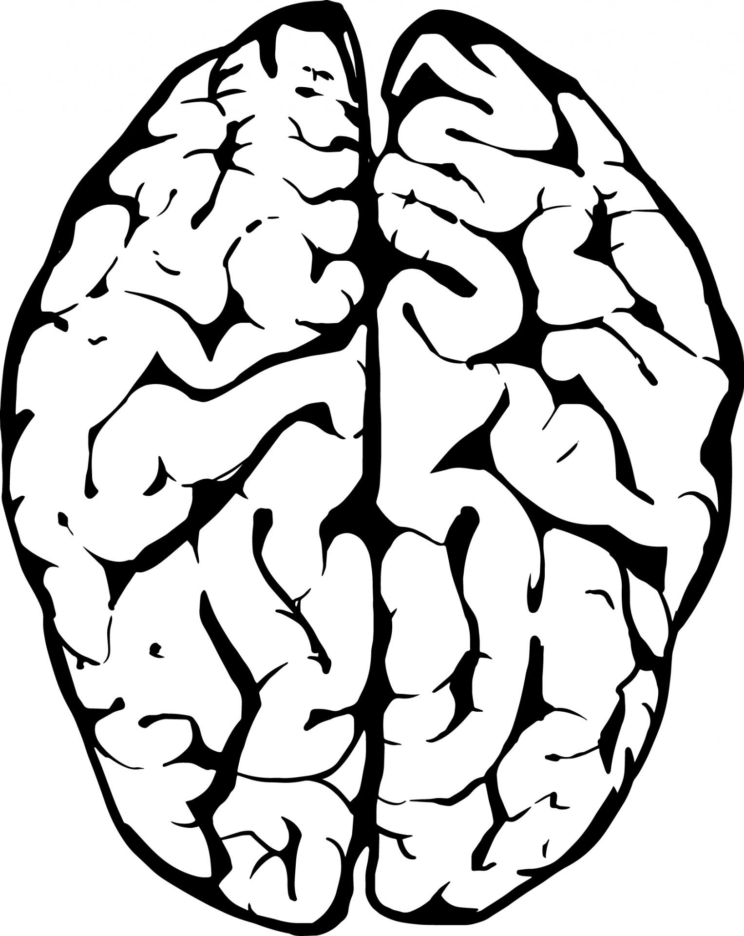 Brain Clipart Free