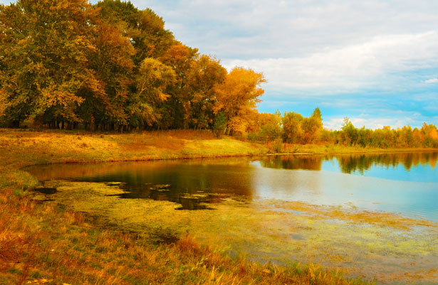 Free Hd Wallpaper Fall River Bank Free Stock Photo Public Domain Pictures