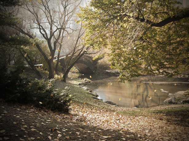 Wallpaper Scenes Of Fall Central Park Free Stock Photo Public Domain Pictures