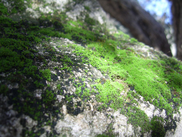Green Moss On Rock Free Stock Photo  Public Domain Pictures