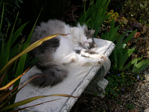 My Cat In The Garden Free Stock Photo  Public Domain Pictures