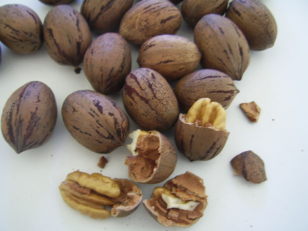 Pecans, National Pecan Day, Nuts