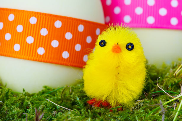 Cute Bird Desktop Wallpaper Yellow Easter Chick Free Stock Photo Public Domain Pictures