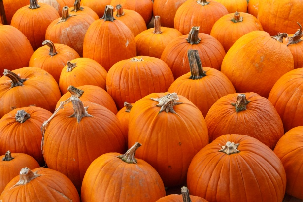 Free Cute Fall Wallpaper Orange Pumpkins Background Free Stock Photo Public