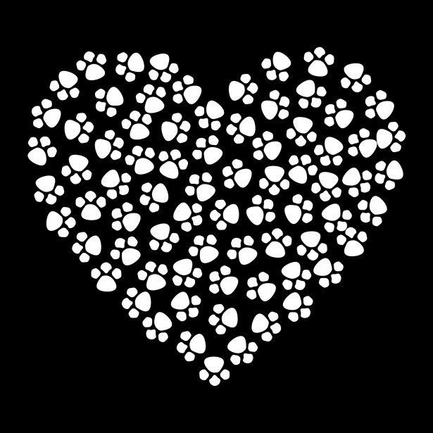 Cat Cute Wallpaper Download Paw Prints Heart White Free Stock Photo Public Domain