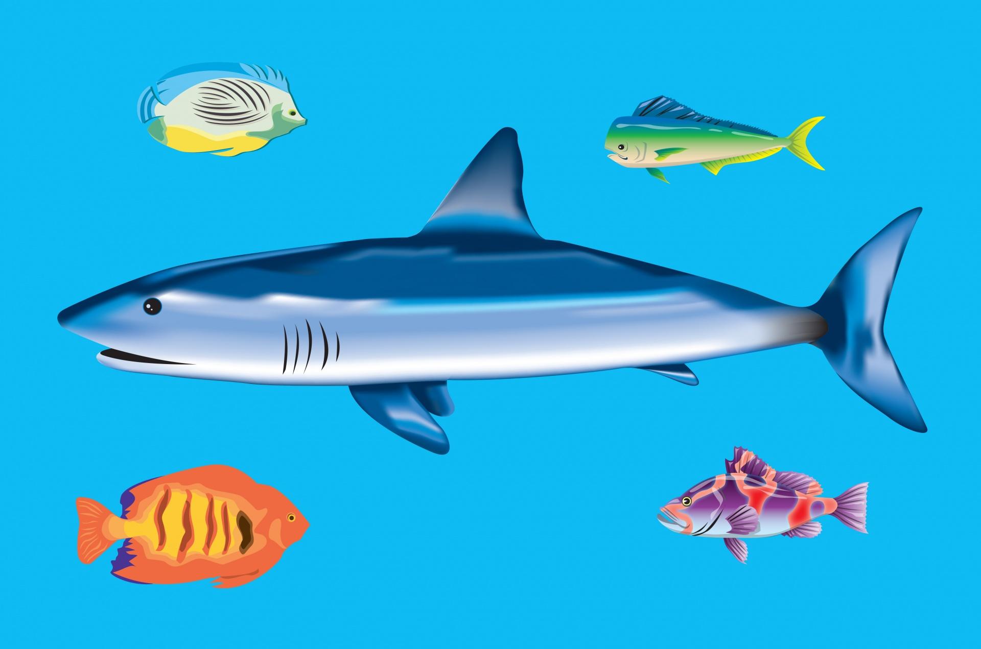 Ocean Animals Wallpaper Fish Free Stock Photo Public Domain Pictures