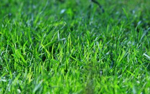 Green Lawn Free Stock Photo - Public Domain Pictures