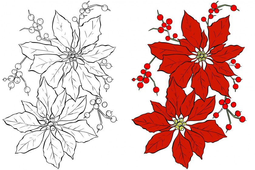 poinsettia flower coloring page free stock photo  public