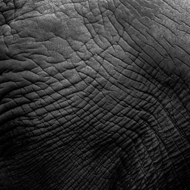 Animal Pattern Wallpaper Elephant Skin Texture Free Stock Photo Public Domain