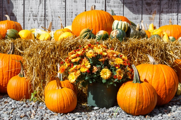 Wallpaper Images Of Fall Fall Harvest Display Free Stock Photo Public Domain Pictures