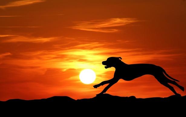 Animal Desktop Wallpaper Dog Running Silhouette Sunset Free Stock Photo Public
