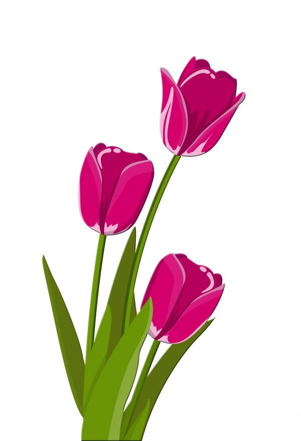 tulips illustration clipart free
