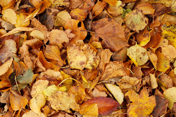 Fall Background Wallpaper Dry Autumn Leaves Texture Free Stock Photo Public Domain