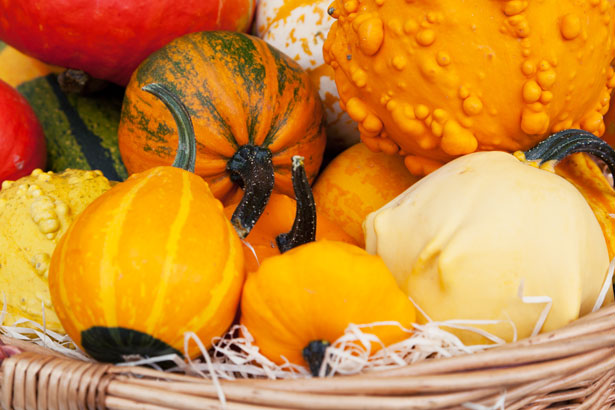 Fall Harvest Free Stock Photo Public Domain Pictures