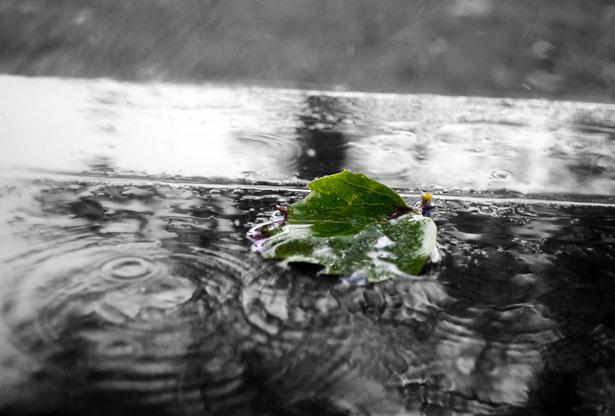 Free Cute Images Wallpapers Green Leaf In The Rain Free Stock Photo Public Domain