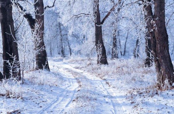 winter landscape free stock