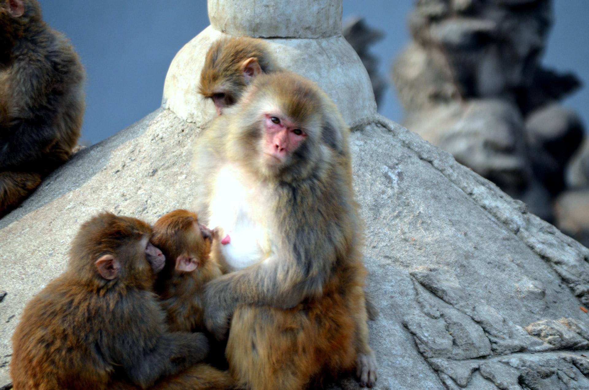 Baboons, Life is beautiful