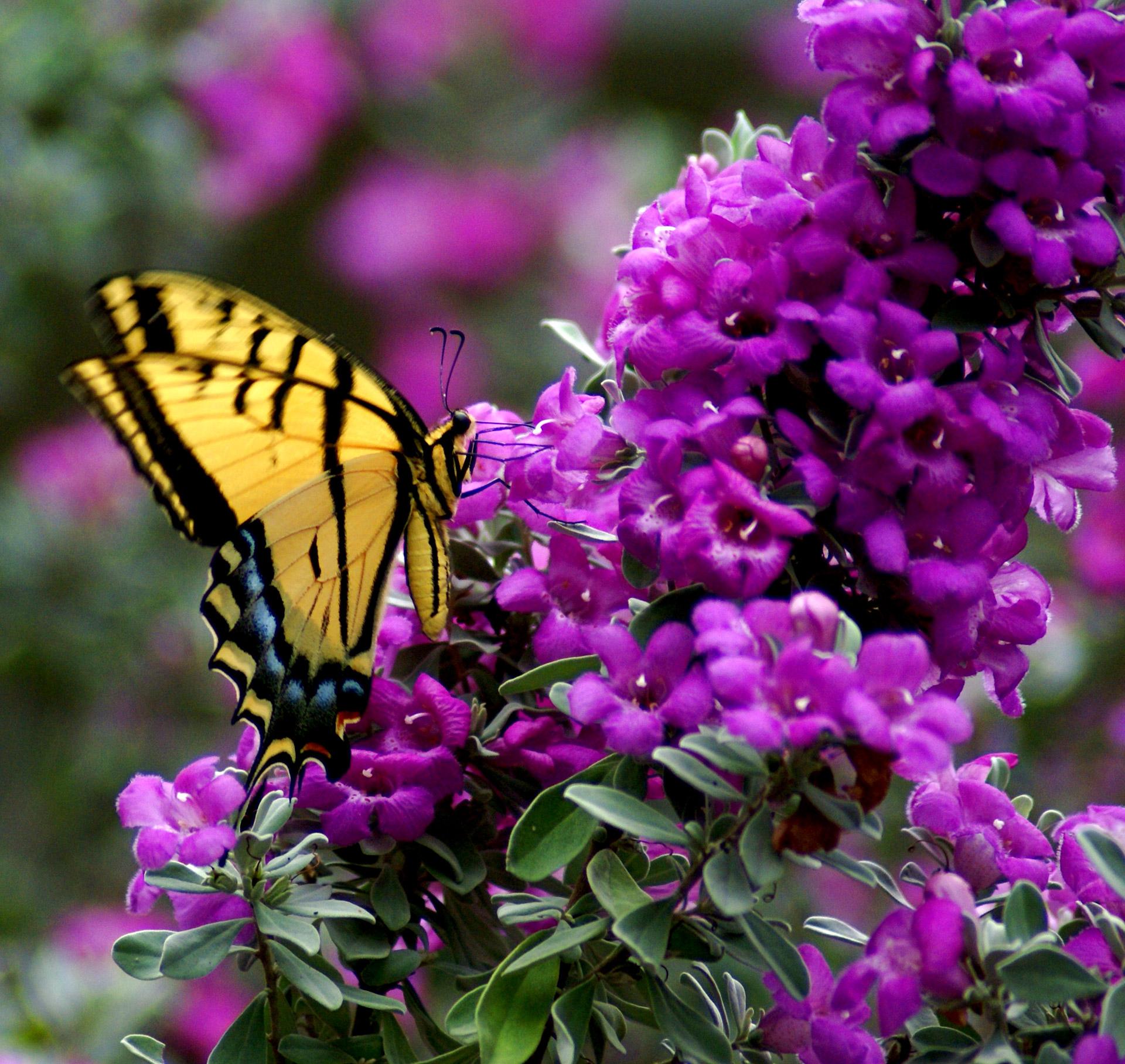 Imagini pentru butterflies