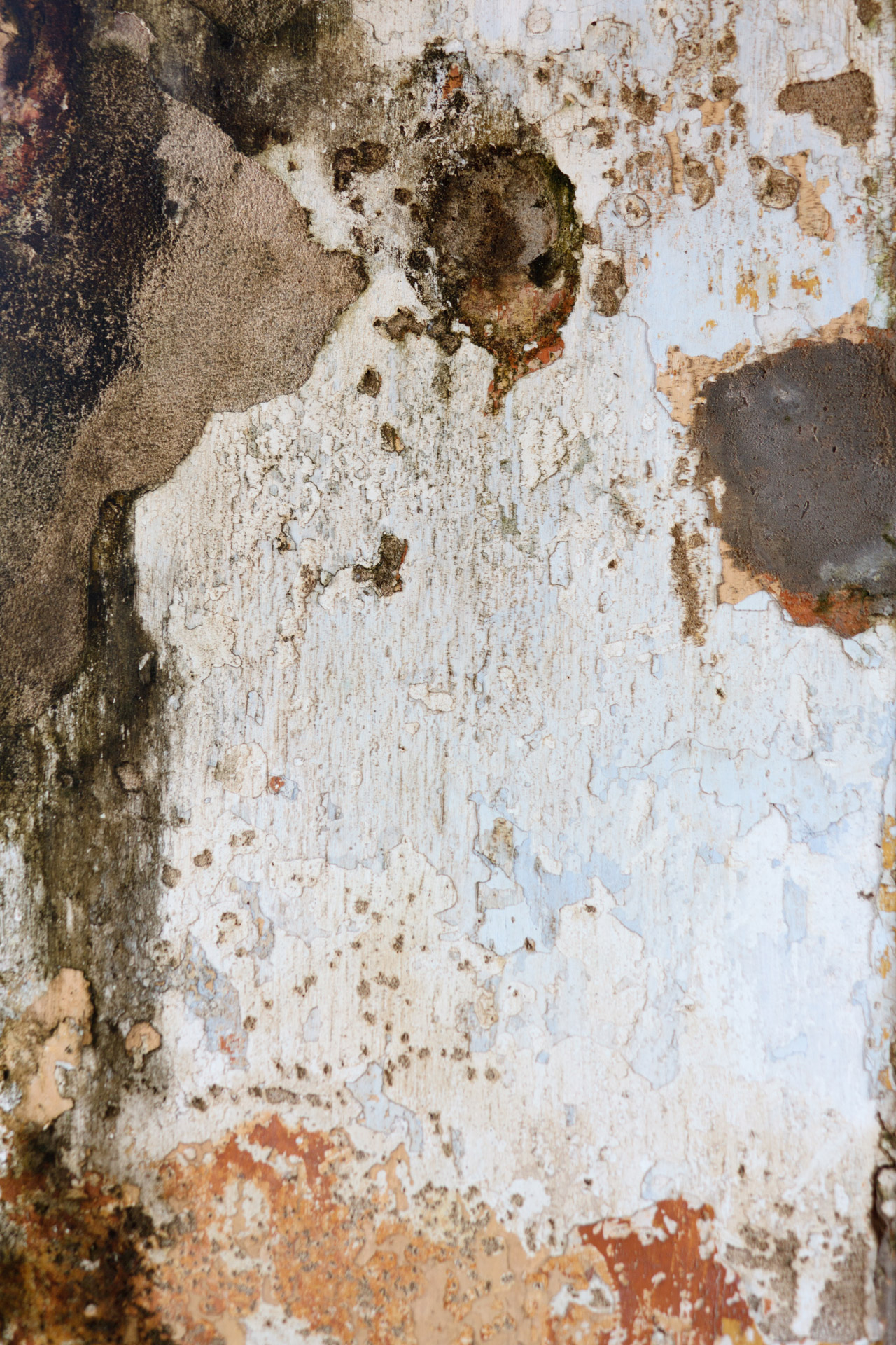 Mold Wall Free Stock Photo Public Domain Pictures