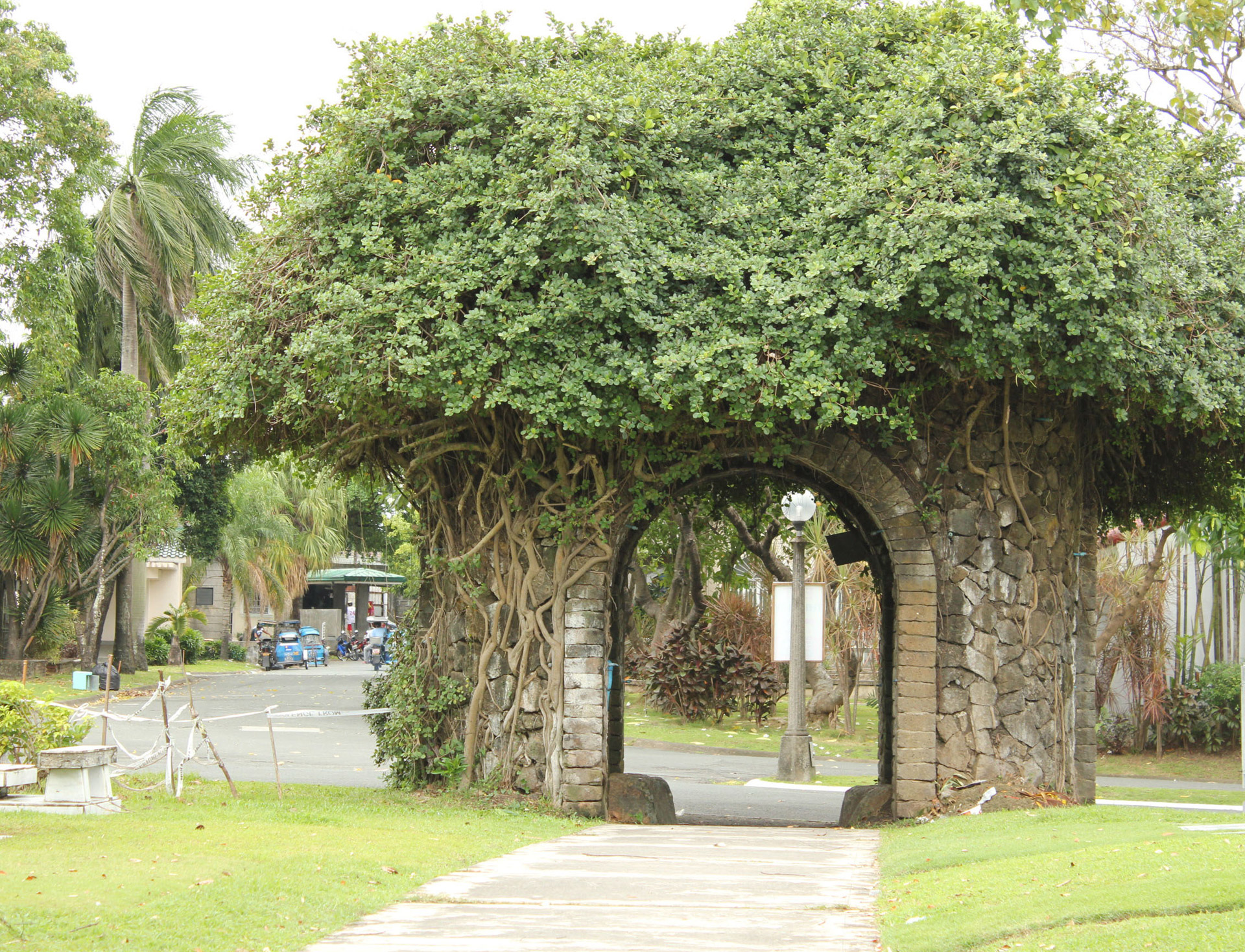 Tree Arch Free Stock Photo  Public Domain Pictures