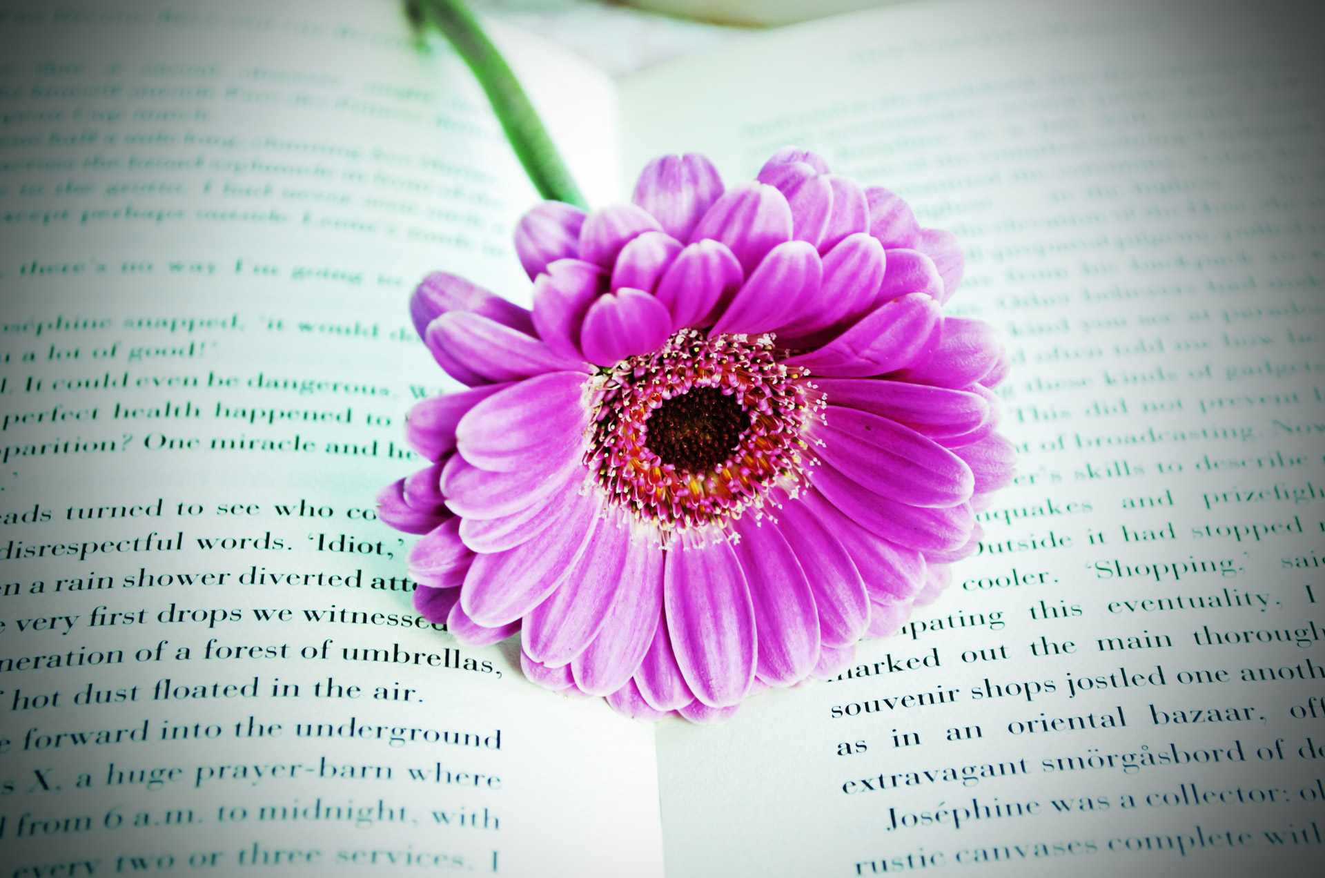 Flower On The Book Free Stock Photo Public Domain Pictures