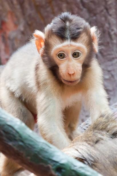 Baby Monkey Free Stock Photo  Public Domain Pictures
