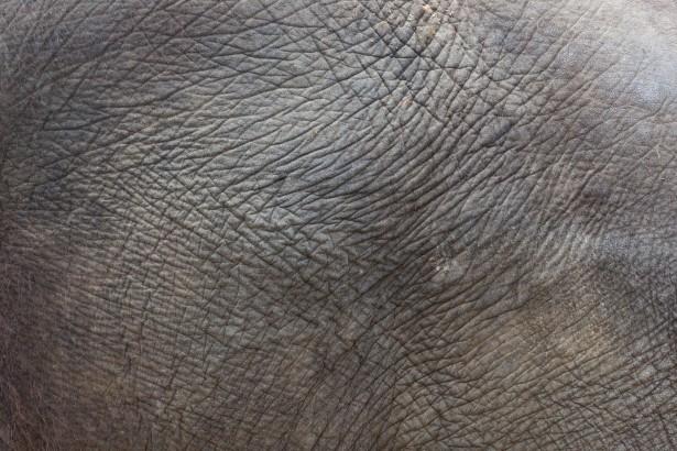 Exotic Animal Wallpaper Elephant Skin Texture Free Stock Photo Public Domain