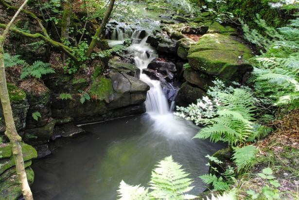 Healey Dell Nature Reserve Free Stock Photo  Public