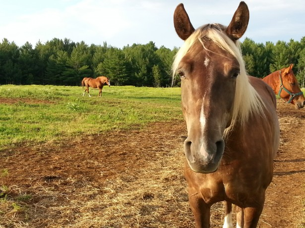 Sad Horse Free Stock Photo  Public Domain Pictures