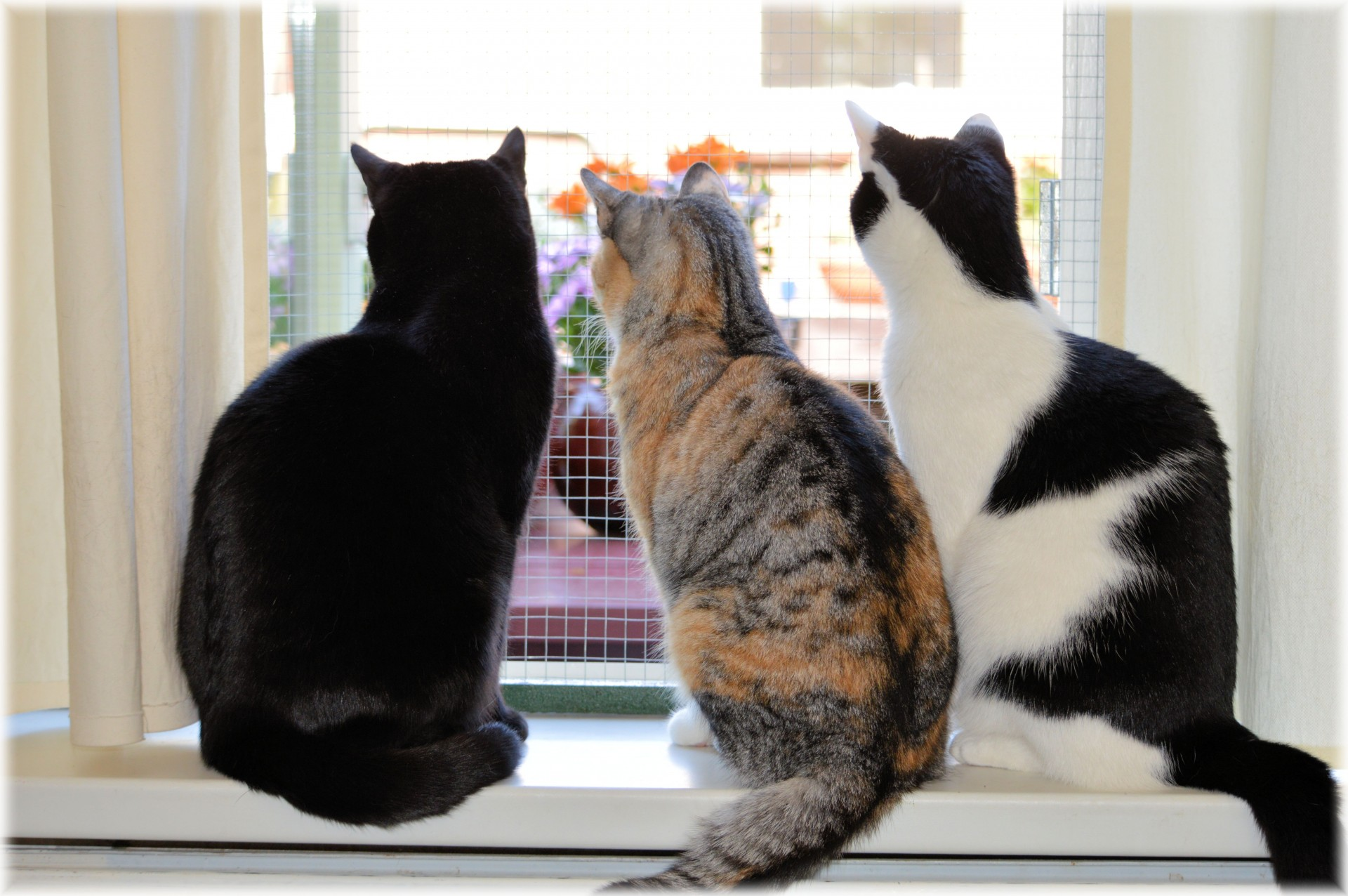 Window, Cats, View from the Window, From Behind the Pen