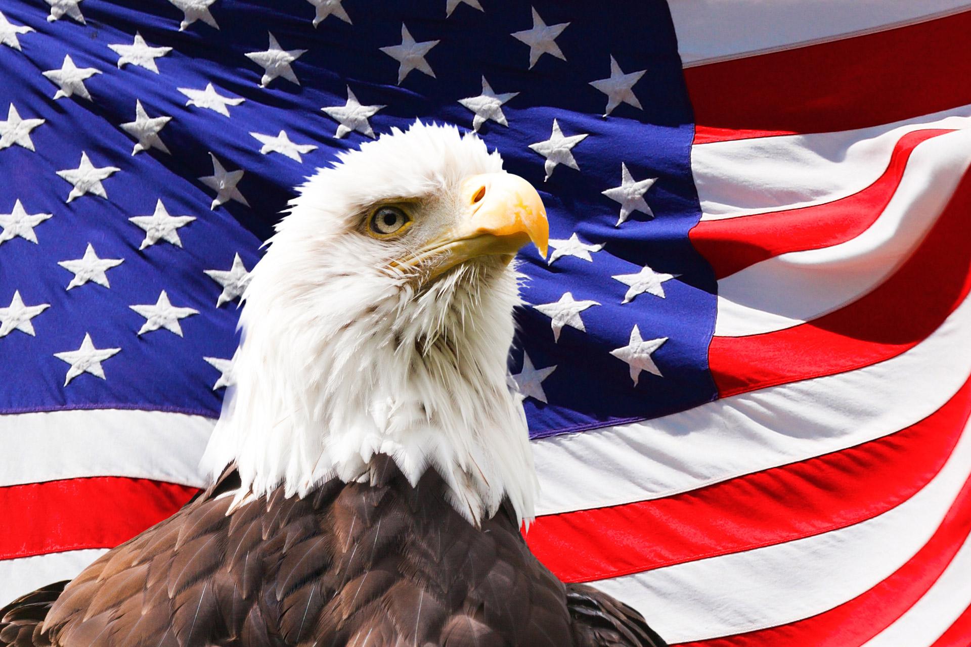 Bald Eagle And A Flag Free Stock Photo Public Domain